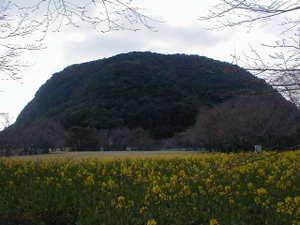 鹿児島県薩摩川内市樋脇町塔之原、丸山公園・丸山自然公園 、夕暮れの丸山と菜の花。