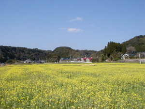 花(桜・梅・菜の花)・草・葉っぱ